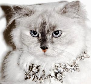 gatto con gemme
